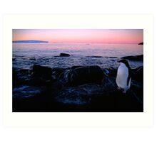 Adelie Sunset, Antarctica Art Print