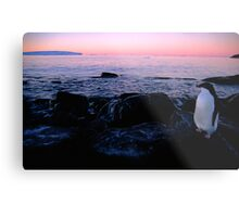 Adelie Sunset, Antarctica Metal Print