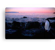 Adelie Sunset, Antarctica Canvas Print