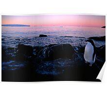 Adelie Sunset, Antarctica Poster