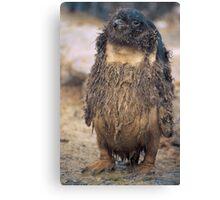 Hippy Penguin, Antarctica Canvas Print