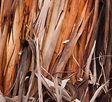 Ribbon Gum Bark  by Werner Padarin