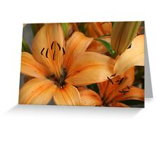 Lilies and Ants Greeting Card