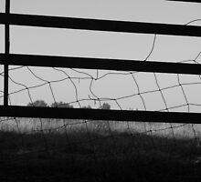 fenced by budrfli