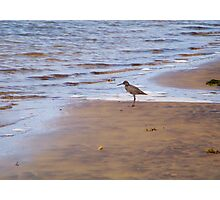 Beach Comber Photographic Print