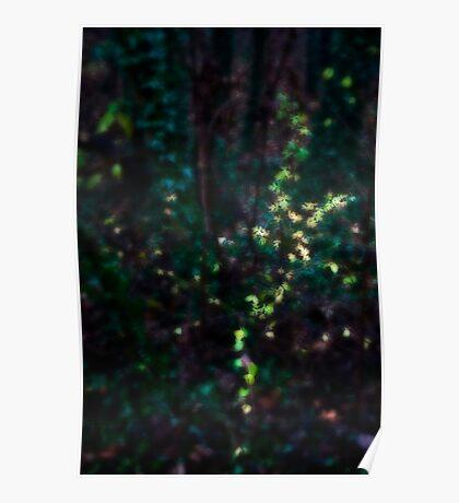 Undergrowth 1 Poster