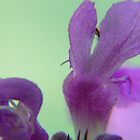 Tiny Purple Flower. by MaeBelle