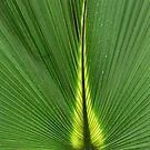 Palms by PhotosByHealy