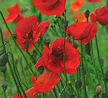 Glass Poppies by David Tait