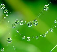 Natures Jewels by Mark Robson
