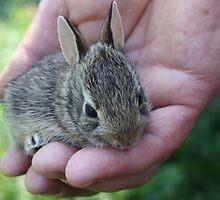 Baby rabbit by annalisa bianchetti
