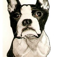 Boston Terrier by CanvasMan