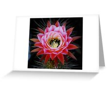 Pink Cactus Bloom Greeting Card