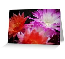Echinopsis In The Sun Greeting Card