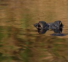 Alligator Dream by William C. Gladish