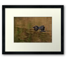 Alligator Dream Framed Print
