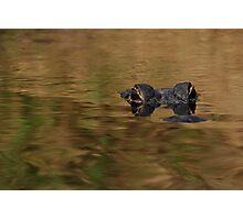 Alligator Dream Photographic Print