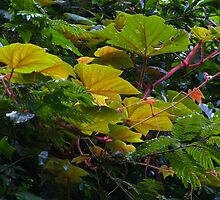 Tropical Leaves by Dave Lloyd