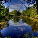 """The Marsh"" by Larry Trupp"