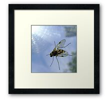 fly, reflecting Framed Print