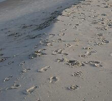 Footprints by bcollie