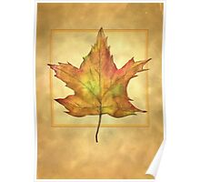 Maple Leaf Illustration Poster