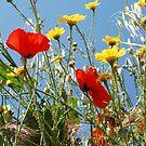 wild flowers by shakey