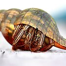 The Hermit Crab 1 by Stormy Brannan