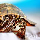 The Hermit Crab 3 by Stormy Brannan
