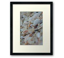 Sea Of Shells Framed Print