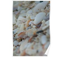 Sea Of Shells Poster