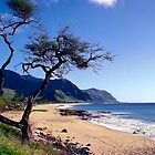 Save Makua Calendar by kevin smith  skystudiohawaii