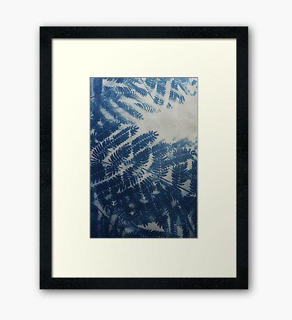 Fern Cyanotype Framed Print