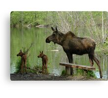 Matriarchal Moose Canvas Print