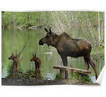 Matriarchal Moose Poster
