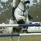 showjumper2 by StaceyH