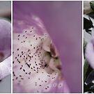 In Bloom by Maureen Kay