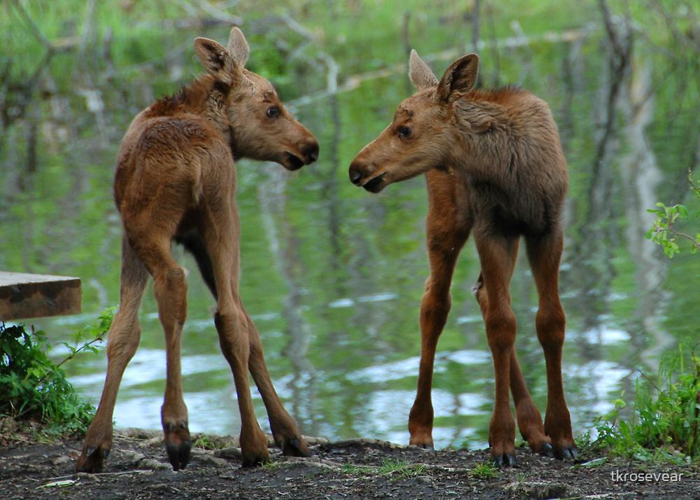 Munchkin Moose by tkrosevear