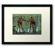 Munchkin Moose Framed Print