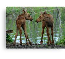 Munchkin Moose Canvas Print