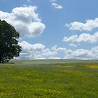 Wiltshire Meadow by Sandra Mangnall