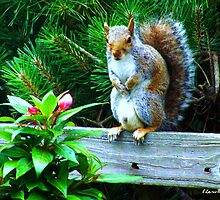 Squirrel in Perfect Pose by Lisa Taylor