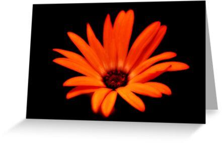 Fire Flower by terrebo