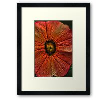 Orange Hibiscus Flowers Framed Print
