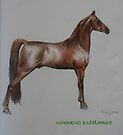 American Saddlebred (For Lori Peters) by louisegreen