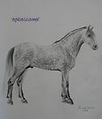 Andalusian by louisegreen