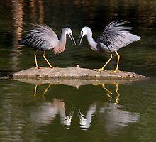 Heron Greeting by Phillip Weyers