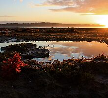 Life in a Rockpool.. by Paul Moore