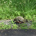 Turtle crossing the road by JoeyAndArly