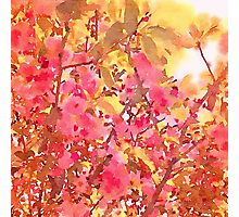 Cherry Blossom Canopy Watercolor Photographic Print